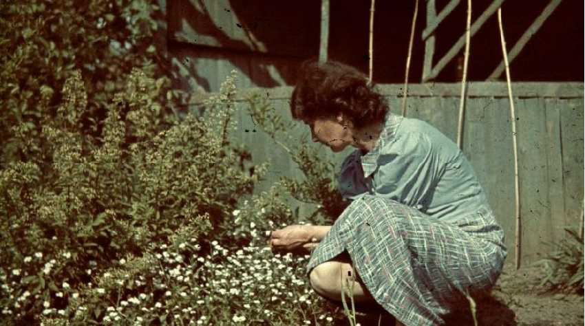 Gartenpflege in Bad Saarow, 1939 (Agfacolor-Dia)